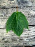 Treibe ich alleine Blätter Stockbild
