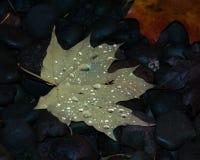 Treibe ich alleine Blätter stockfoto