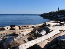 Treiben Sie Holz nahe dem Meer, Britisch-Columbia, Kanada Stockfotos
