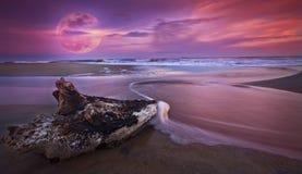 Treiben Sie Holz am Sonnenuntergang auf sandigem Strand und Vollmond Lizenzfreie Stockbilder