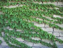 Treibhauspflanze Herbstblumenbeschaffenheiten lizenzfreie stockfotos