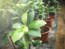 Treibhauspflanze Herbstblumenbeschaffenheiten stockbilder