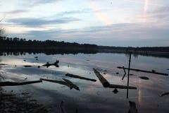 Treibholz auf dem See Stockbilder