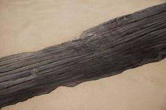 Treibholz auf dem Strand Stockbilder