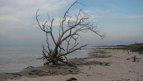 Treibholz auf dem Strand Lizenzfreies Stockbild