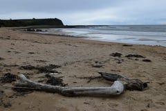 Treibholz auf dem Strand Stockbild