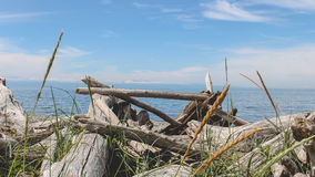 Treibholz auf dem Strand Stockfoto