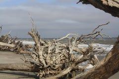 Treibholz auf dem Strand in Jeklly-Insel Stockbilder