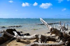 Treibholz auf einem Strand Stockbild