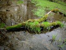 Treibholz auf einem Sumpf lizenzfreie stockfotografie