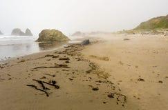 Treibholz auf einer Küste Lizenzfreies Stockbild