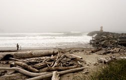 Treibholz auf einer Küste Stockbild