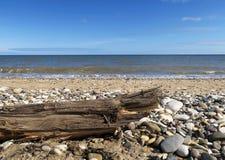 Treibholz auf stoney Strand Lizenzfreies Stockfoto