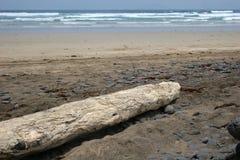 Treibholz auf Strand lizenzfreies stockbild
