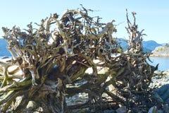 Treibholz auf Strand Stockfotos