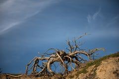 Treibholz auf Strand Stockbilder