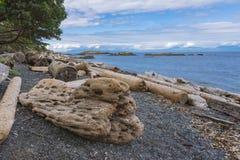 Treibholz auf Strand auf Insel Nanaimo Vancouver Britisch-Columbia lizenzfreie stockfotografie