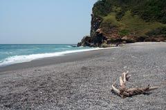 Treibholz auf verlassenem Strand Stockfotografie