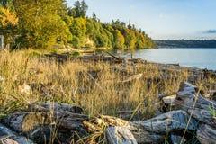 Treibholz Autumn Shoreline 2 lizenzfreie stockfotos