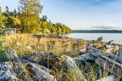 Treibholz Autumn Shoreline 3 lizenzfreie stockfotos