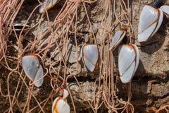 Treibholz f.m. tråd Royaltyfri Fotografi