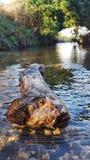 Treibholz im Fluss Stockfotos