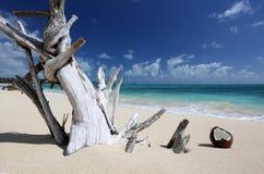 Treibholz-Kokosnuss Sandy Beach Turquoise Ocean Hawaii Stockbilder