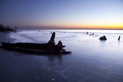 Treibholz am Sonnenaufgang Stockfotografie