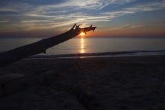Treibholz-Sonnenuntergang an Higbee-Strand Stockbild