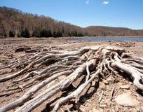 Treibholz und ein See Stockbilder