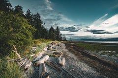 Treibholz und meldet einen sandigen Strand auf Vancouver Island mit Wald und blauen Himmel im backgorund an lizenzfreies stockbild