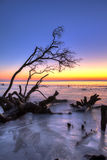 Treibholz und Sonnenaufgang hdr Stockbild