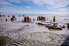Treibholz und tote Bäume auf dem Strand am Jagd-Inselnationalpark lizenzfreie stockbilder