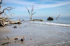 Treibholz und tote Bäume auf dem Strand am Jagd-Inselnationalpark Ruhiges Wasser bei Ebbe lizenzfreies stockbild