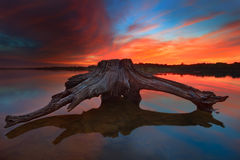 Treibholz während eines vibrierenden Sonnenaufgangs Lizenzfreie Stockfotos