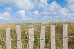 Treibholz-Zaun, der Strand-Vegetation hält Stockfoto