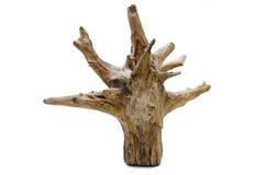 Treibholzbaumstumpf stockbilder