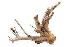 Treibholzbaumstumpf auf weißem Hintergrund Stockbilder