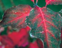 Treibt bacground Blätter Stockbild