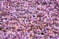 Treibt Hintergrund Blätter stock abbildung