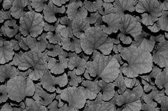 Treibt Schwarzweiss Blätter Lizenzfreies Stockfoto