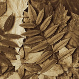 Treibt Sepia Blätter stockbilder