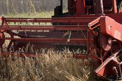 Treierand threshing grain on the field. Harvesting combine cutting  different grain in the field during the  fall Royalty Free Stock Photos