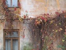 Treilles épaisses sur un vieux mur de bâtiment de ville Photographie stock
