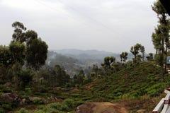 Trein die groene theeaanplanting en een stad langs de manier op t overgaan stock foto's