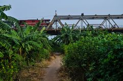 Trein die over banaanbosjes overgaan Royalty-vrije Stock Foto's