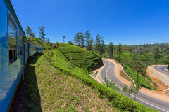 Trein onder theeaanplantingen Royalty-vrije Stock Foto