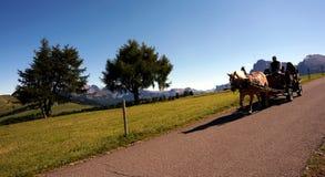 Treinador do cavalo que conduz em cume maravilhoso de siusi Fotos de Stock