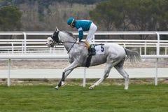 Treinamento da corrida de cavalos Esporte da competição hippodrome Backgr da velocidade Imagem de Stock