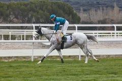 Treinamento da corrida de cavalos Esporte da competição hippodrome Backgr da velocidade Fotos de Stock